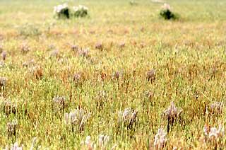 昨年の稲の刈り株と動き始めた春草のコラボレーションが美しい。この時期だけの平和な時間。