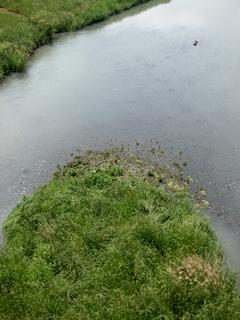 木の子橋から栃山川を見る。この流れには何か縁がありそうだ。上流にはアンコメ米作りプロジェクトの松下の田圃がある。たぶん興味のない人には単なる水の流れにしか見えないのかもしれない。けっして清流と呼ばれるような美しい水面ではない。目を覆いたくなる場所もある。しかしこの流れには、この土地に生きた数多の農人の歴史と日常、そして今がある。そういうイマジネーションをすると、名もないこの流れが愛おしくなる。それは、私もその末席に加えてもらったからだろうか。