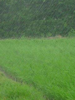 雨の降る造形。小生はこれら雲と雨と水が作り出す日本の造形をモンスーンアートと呼ぶ。雨は日本の原風景そのもの、雨なくして日本の風景は語れないと云っていい。時に非情なほど猛威を振るう時もあるが雨を憎む日本人はいないだろう。