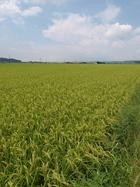 できる生産者のデキる米。