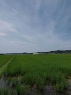 水田徘徊 森町から磐田へ