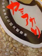 カミアカリ炊飯ワークショップ@東京日本橋