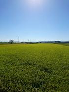 水田徘徊2017 森町堀内さん再々訪。