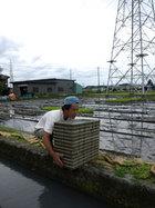 6月15日号 田植えは始まりの終わり。