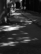 カミアカリドリーム2010