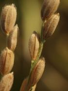 22年産カミアカリ収穫。